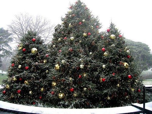 Juletrær utendørs
