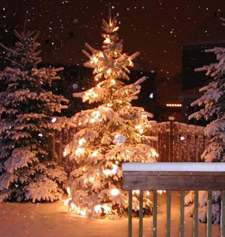 Snødekket nydelig juletre